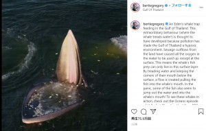 【海外発!Breaking News】ドローンが真上から捉えたクジラの捕食シーンが迫力満点(タイ)<動画あり>