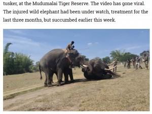 回復の兆しを見せるも、数日後には再び弱っていったゾウ(画像は『Zee News 2021年1月22日付「Injured wild elephant dies in Tamil Nadu's Mudumalai Tiger Reserve, caretaker mourns loss」』のスクリーンショット)