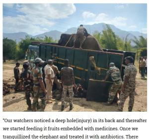 さらなる治療を受けるためトラックに載せた矢先、命を落としてしまったゾウ(画像は『Zee News 2021年1月22日付「Injured wild elephant dies in Tamil Nadu's Mudumalai Tiger Reserve, caretaker mourns loss」』のスクリーンショット)