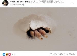 穴から飛び出たフラッフの足(画像は『Floof the possum 2021年1月6日付Facebook』のスクリーンショット)