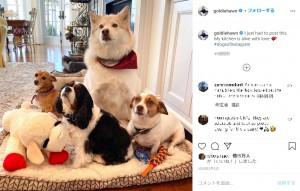 4匹が行儀よく並んだベストショット(画像は『Goldie Hawn 2020年1月31日付Instagram「I just had to post this.」』のスクリーンショット)