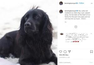 昨年11月に天国へと旅立った愛犬ルポ(画像は『Duke and Duchess of Cambridge 2020年11月22日付Instagram「Very sadly last weekend our dear dog, Lupo, passed away.」』のスクリーンショット)