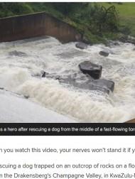 【海外発!Breaking News】ダムの岩場に取り残された犬を濁流の中で救出した男性「放っておけなかった」(南ア)<動画あり>
