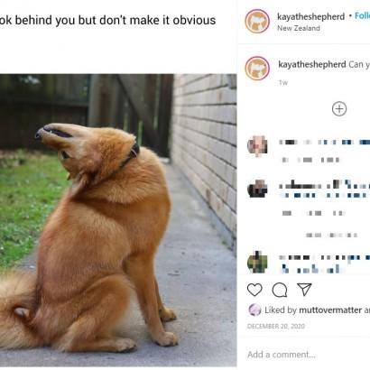 【海外発!Breaking News】首を後ろに180度反らすことができる犬(ニュージーランド)<動画あり>