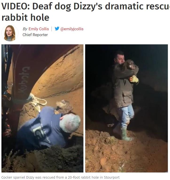 ショベルカーによる捜索の末、愛犬と再会果たす(画像は『The Kidderminster Shuttle 2021年1月5日付「VIDEO: Deaf dog Dizzy's dramatic rescue from Stourport rabbit hole」』のスクリーンショット)