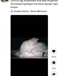 【海外発!Breaking News】「ねえ、ママ起きて!」飼い主を夜中に叩き起こそうとする猫(スコットランド)<動画あり>