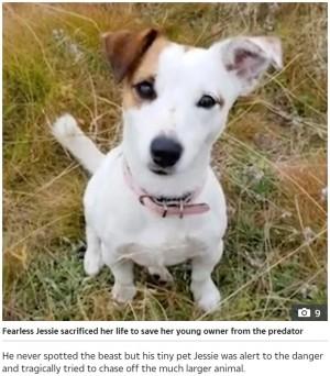 【海外発!Breaking News】迫り来るオオカミから飼い主の息子を守った犬、自らの命を犠牲に(露)<動画あり>
