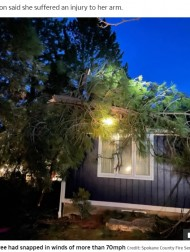 【海外発!Breaking News】倒木が屋根を突き破り寝室を直撃 寝ていた女性は奇跡の回避(米)<動画あり>