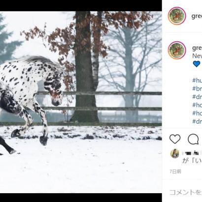 【海外発!Breaking News】ダルメシアン柄の馬、ポニー、犬が雪原を並走 種族を超えた友情に「3頭の信頼関係は素晴らしい」(オランダ)<動画あり>