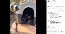 出産間近の猫を自分の小屋に招き入れたピットブル その後一緒に過ごすように(メキシコ)