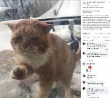 【海外発!Breaking News】寒さで凍えそうな迷い猫「中に入れて」と言わんばかりの表情で窓をノック(カナダ)