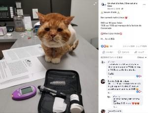 治療中も喉を鳴らして甘えるアスラン(画像は『Un chat à la fois / One cat at a time 2019年3月2日付Facebook「besoin d'aide」』のスクリーンショット)