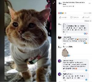 体調が改善しつつあるアスラン(画像は『Un chat à la fois / One cat at a time 2019年4月16日付Facebook』のスクリーンショット)
