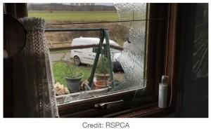 粉々に割れてしまった窓ガラス(画像は『LADbible 2021年1月19日付「Elderly Woman Narrowly Misses Injury As Swan Crashes Through Bathroom Window」(Credit: RSPCA)』のスクリーンショット)