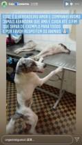 【海外発!Breaking News】事故で怪我をした仲間に一晩中寄り添う犬、治療中も離れず(ブラジル)<動画あり>