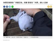 【海外発!Breaking News】レース鳩を狙う誘拐犯6人逮捕 その価値370万円のサラブレッド鳩を保護(台湾)