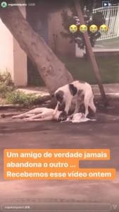 仲間を起こそうとする犬(画像は『ONG ADOTA IGUATU 2021年2月15日付Instagram』のスクリーンショット)