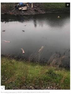 通報者によって警察が駆けつける騒ぎに(画像は『People.com 2021年2月16日付「Floating Mannequin Limbs Mistaken for Human Bodies in Northern Calif. Canal: 'Only in Stockton'」(CREDIT: CALIFORNIA HIGHWAY PATROL STOCKTON)』のスクリーンショット)
