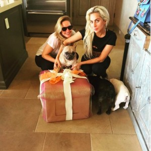 コジの2歳のバースデーをお祝いするレディー・ガガ(画像は『Lady Gaga 2017年1月14日付Instagram「Happy Birthday Koji you're 2 years old!」』のスクリーンショット)