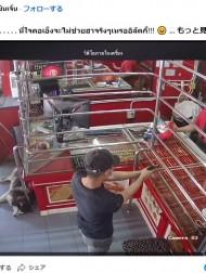 【海外発!Breaking News】宝石店の番犬、昼寝中に現れた強盗犯にピクリとも動かず 「ダメっぷりが可愛い」と話題に(タイ)<動画あり>