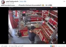 宝石店の番犬、昼寝中に現れた強盗犯にピクリとも動かず 「ダメっぷりが可愛い」と話題に(タイ)<動画あり>