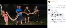 【海外発!Breaking News】136キロの巨大ビルマニシキヘビを発見 お腹の中には100個の卵も(米)
