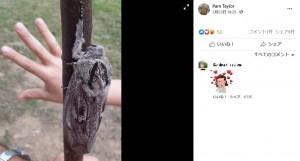 子どもの手のひらよりも大きな蛾(画像は『Pam Taylor 2021年2月23日付Facebook』のスクリーンショット)