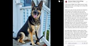【海外発!Breaking News】脳卒中で倒れた飼い主、数か月前に保護した愛犬の機転で命を救われる(英)