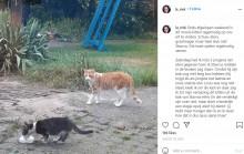 【海外発!Breaking News】野良猫に自分の餌を分けていた飼い猫、ベストフレンドになって一緒に暮らす(オランダ)