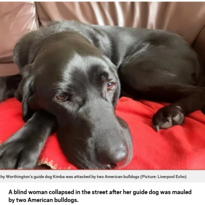 【海外発!Breaking News】2匹の犬に襲われた盲目の女性、盲導犬がケガをしながらも追い払う(英)