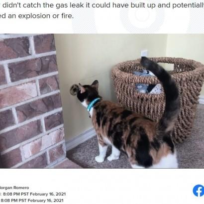 【海外発!Breaking News】ガス漏れにいち早く気付いた猫、飼い主も「私達の命を救ってくれた」(米)<動画あり>