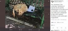 """【海外発!Breaking News】「家族がいじめるんだ。引き取って!」子供の手紙とともに保護された犬に""""第2の人生""""(メキシコ)<動画あり>"""