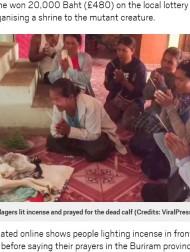 【海外発!Breaking News】2つの頭を持つ子牛は「天からの贈り物」 誕生後、宝くじに当選した男性(タイ)<動画あり>