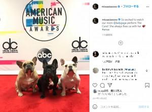 左からコジ、ミス・アジア、グスタフ(画像は『Miss Asia 2017年11月19日付Instagram「So excited to watch our mom @ladygaga perform The Cure!!」』のスクリーンショット)