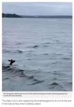 海で溺れかけたカンガルー、近くにいた家族に身を任せ救出される(豪)<動画あり>