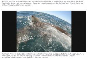 【海外発!Breaking News】銛で漁をしていた青年 手に持っていた魚をサメに奪われ腕を失いかける(ニュージーランド)<動画あり>