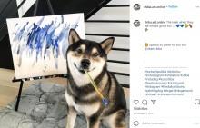 【海外発!Breaking News】絵を描く柴犬、画家デビュー4年で売り上げ190万円超に!(カナダ)<動画あり>