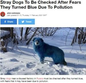 【海外発!Breaking News】体毛が青や緑に染まった野犬が発見される 化学汚染の影響か(露)