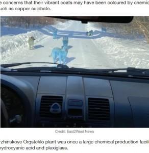 化学物質の残骸が犬の毛に付着か(画像は『LADbible 2021年2月11日付「Stray Dogs To Be Checked After Fears They Turned Blue Due To Pollution」(Credit: East2West News)』のスクリーンショット)
