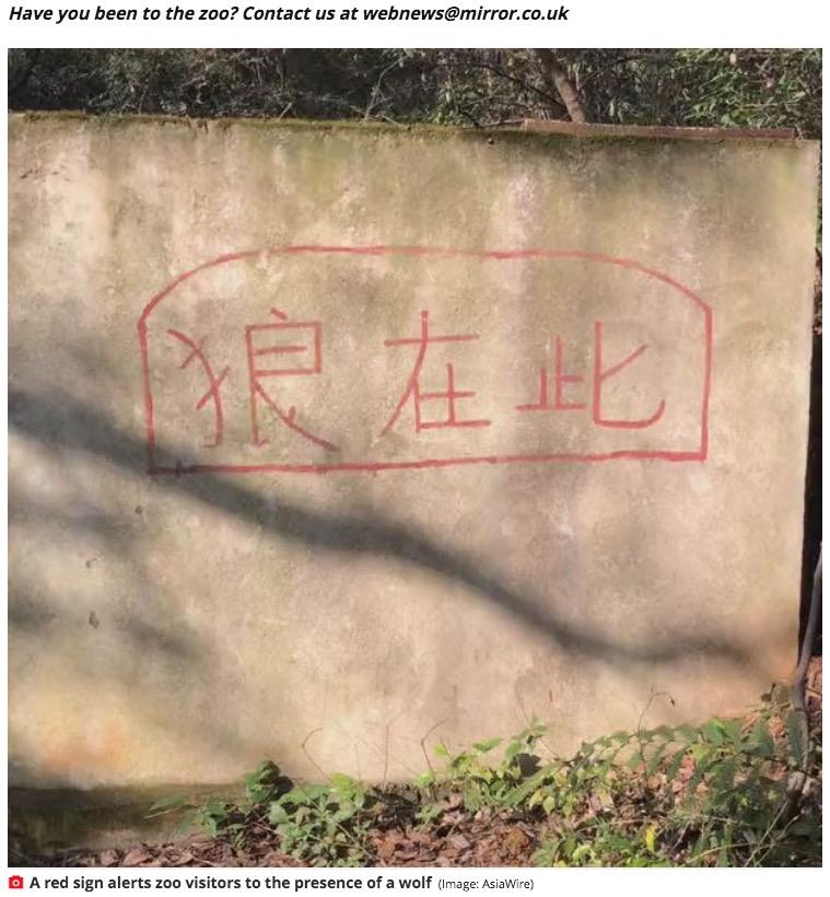 「オオカミはコチラ」と書かれた案内表示(画像は『Mirror 2021年3月6日付「Chinese zoo 'tries to pass dog off as a wolf' in cage after animal dies of old age」(Image: AsiaWire)』のスクリーンショット)