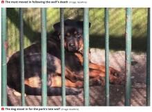 【海外発!Breaking News】死んだオオカミの代わりに犬を檻に入れて展示 中国の動物園に失笑<動画あり>