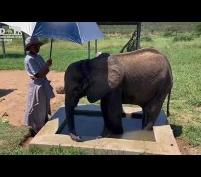 【海外発!Breaking News】密猟者の罠にかかり、傷だらけで保護された子ゾウ 治療の甲斐なく死ぬ(南ア)<動画あり>
