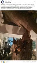 【海外発!Breaking News】強風で樹齢300年の大木が倒れる 数メートル先では 州知事が食事中(南ア)