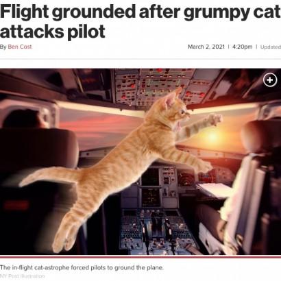 【海外発!Breaking News】コックピットで猫が大暴れ、パイロットが攻撃されて緊急着陸(スーダン)