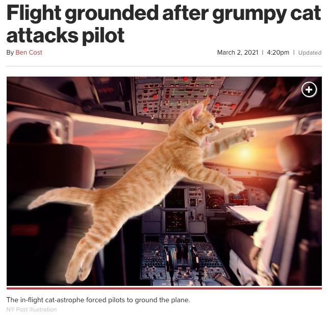 フライト中、パイロットが猫に攻撃される(画像は『New York Post 2021年3月2日付「Flight grounded after grumpy cat attacks pilot」(NY Post illustration)』のスクリーンショット)