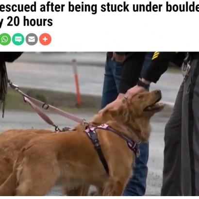 【海外発!Breaking News】岩に挟まれ鳴き声も出せなかった犬、母犬が匂いを嗅ぎ当てピンチを救う(米)