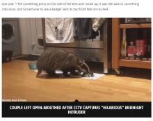 【海外発!Breaking News】猫用ドアから侵入し安眠を妨害する珍入者 キャットフードを盗み食いする姿をカメラが捉えた(英)<動画あり>
