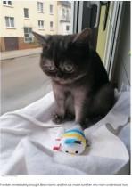 """【海外発!Breaking News】 """"ブサイク""""と呼ばれた野良猫 「一目ぼれ」した女性に引き取られて幸せに(独)"""