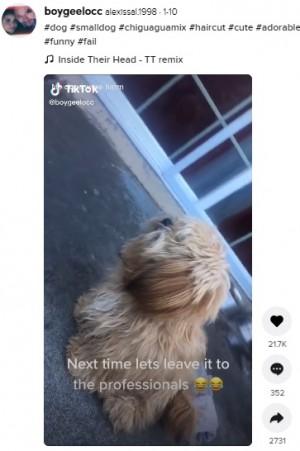 【海外発!Breaking News】お手入れ途中でトリミングを拒否した犬、まるでライオンのように(米)