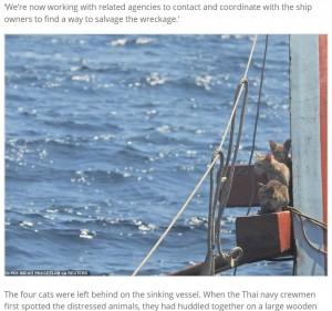 半分ほど沈みかけた船に取り残された猫たち(画像は『Express Informer 2021年3月3日付「Saved from cat-astrophe: Four cats are rescued from a sinking ship by Thai navy」(PO1 WICHIT PUKDEELON via REUTERS)』のスクリーンショット)
